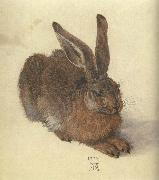 Albrecht Durer A Young Hare China oil painting reproduction