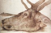 Albrecht Durer The Head of a stag Killed by an arrow China oil painting reproduction