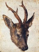 Albrecht Durer The Head of Stag China oil painting reproduction