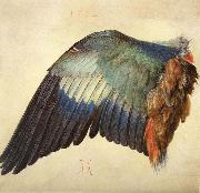 Albrecht Durer Wing of a Blue Roller China oil painting reproduction